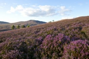 Derbyshire Moorland re-wilding